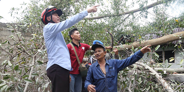 Pohon Tumbang, 11 Rumah Rusak