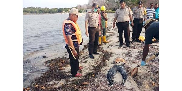 Gempar, Warga Temukan Mayat Tanpa Kepala dan Tangan di Pantai 1