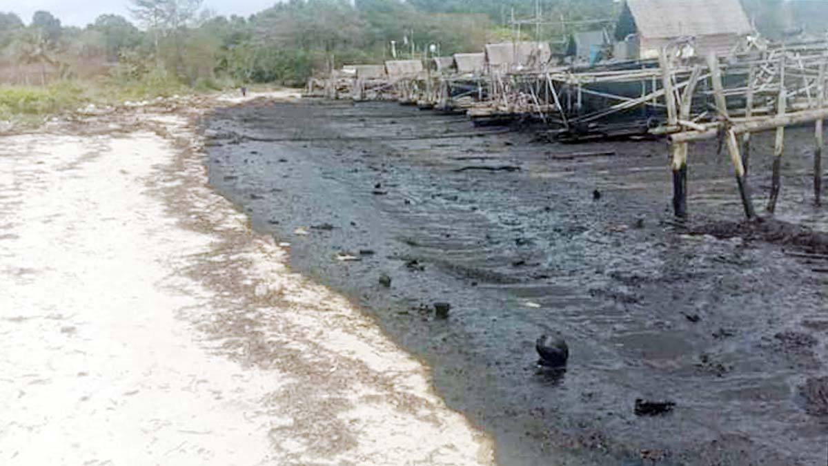 Pantai Trikora Dikotori Limbah Minyak Hitam 1