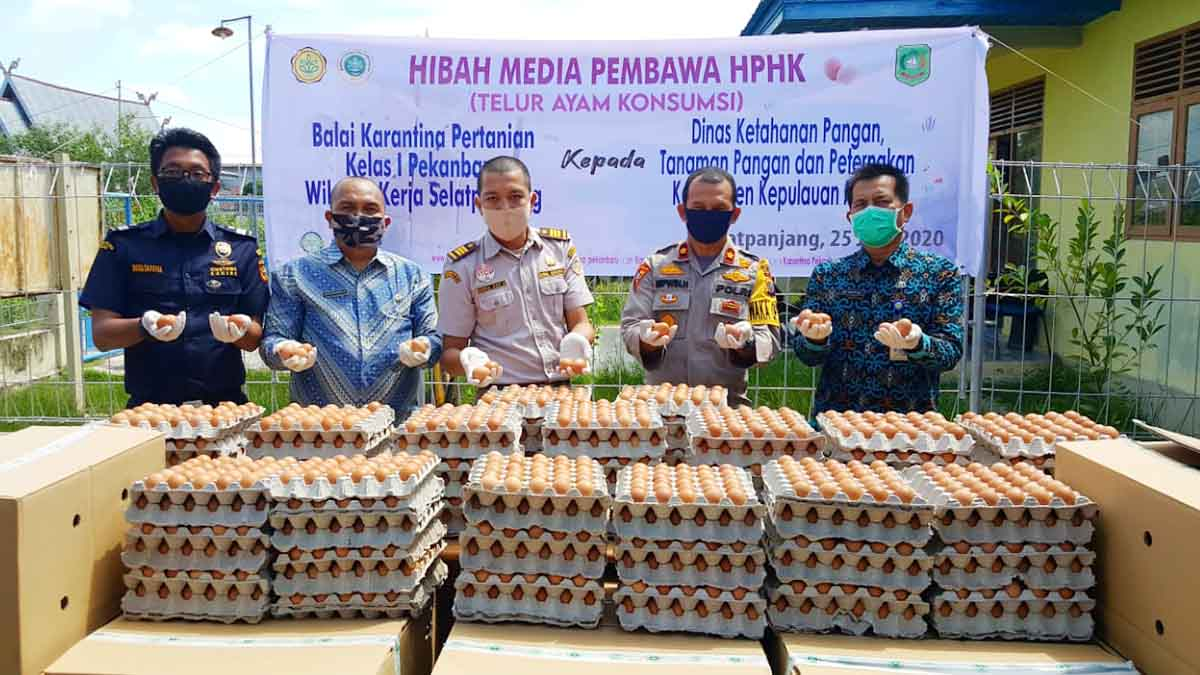 Balai Karantina Meranti Amankan 7.100 Telur Ayam 1