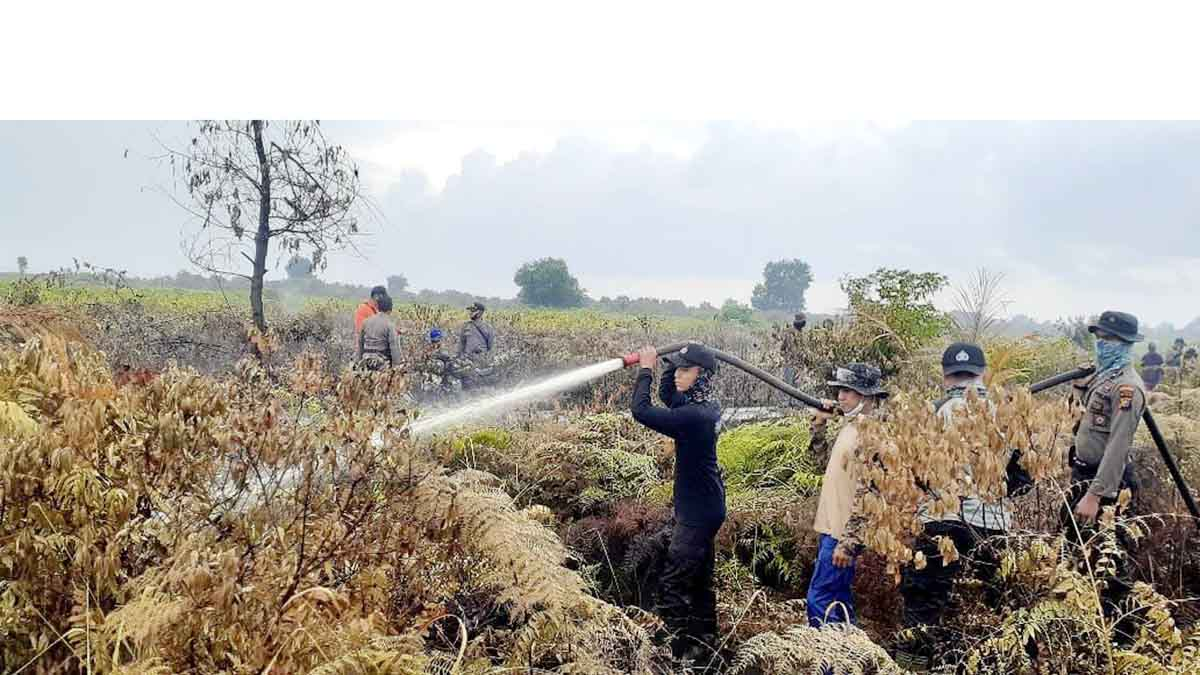 Sekitar 8 Hektar Lahan Desa Sungai Gayung Terbakar 1