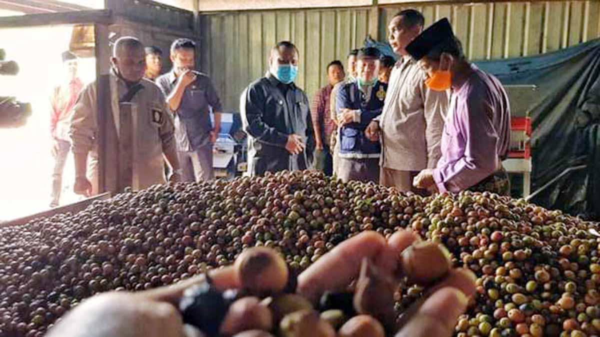 Bupati Meranti Bangun Centra Industri Kopi di Rangsang Pesisir 32