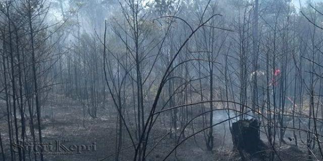 Pak Polisi, Tolong Tangkap Pelaku Pembakaran Hutan Bintan