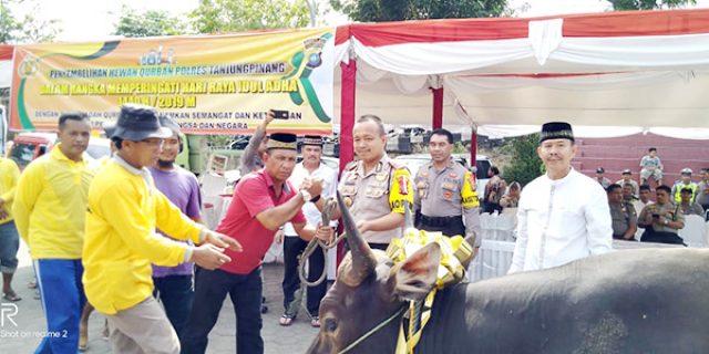 Polres Tanjungpinang Kurban 5 Ekor Sapi dan 3 Kambing