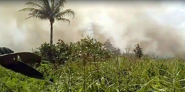 10 Hektar Hutan Dilalap Sijago Merah, Pelaku Ditangkap