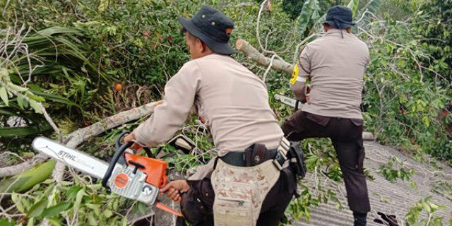 Pohon Tumbang Timpa Rumah Warga di Melayu Kota Piring