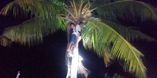 Usai Sholat Magrib, Pria Nekat Gantung Diri di Atas Pohon Kelapa